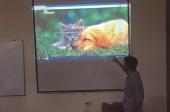 A Adopção de animais pela net já é possível em Fafe