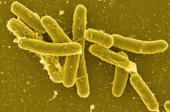 Detectada Salmonela em Agrela e em Medelo